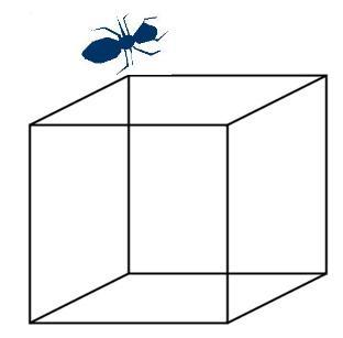 Hormiga-Cubo